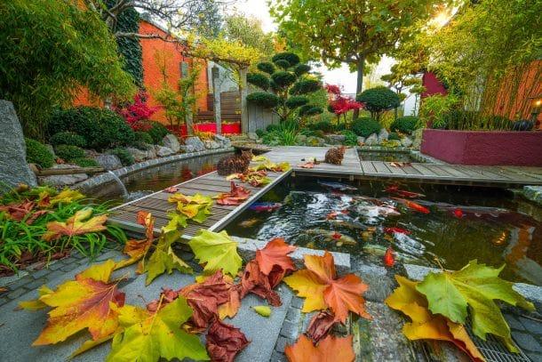 Privater Garten mit zentralem Koiteich, Herststimmung mit Laub